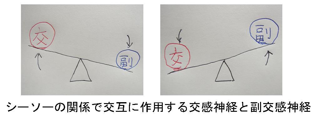 生駒市の整体院「理楽ウェーブ」の交感神経と副交感神経の画像