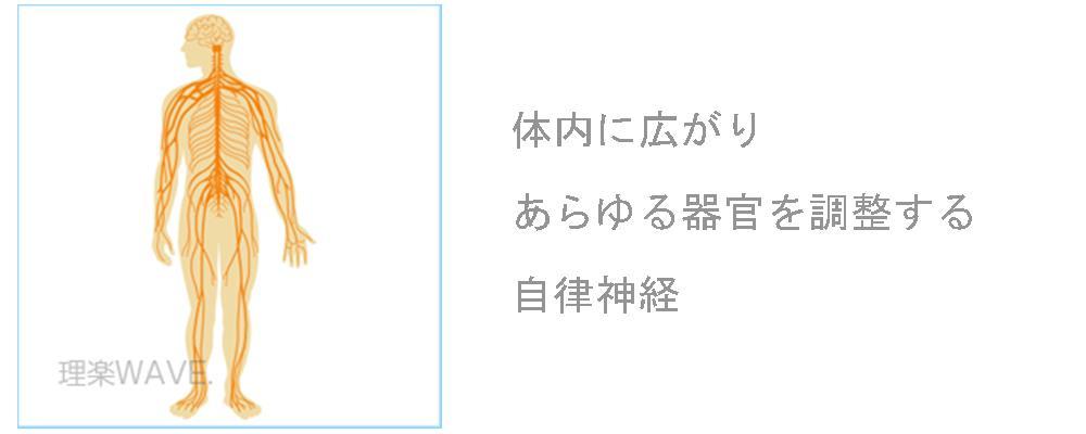 奈良県生駒市の自律神経専門整体院の自律神経図