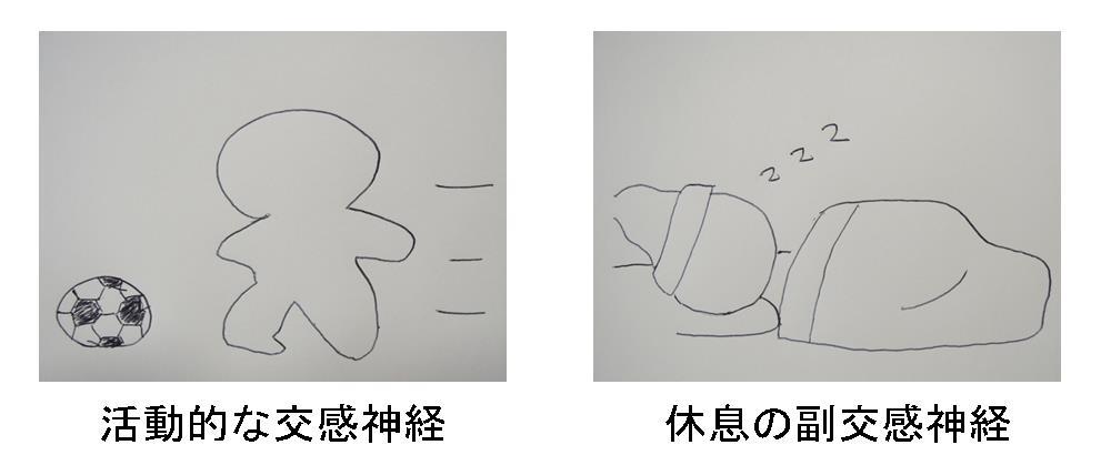 生駒市の自律神経専門整体院「理楽ウェーブ」の自律神経の画像