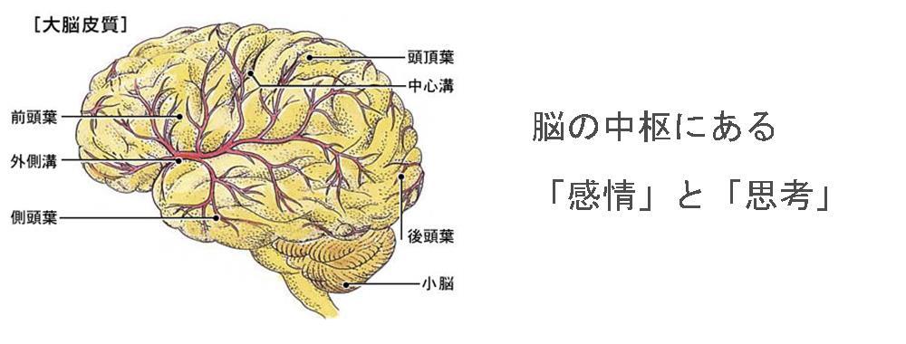 奈良県生駒市の自律神経専門整体院「理楽ウェーブ」の感情思考画像