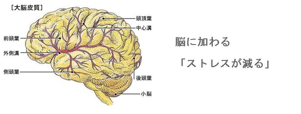 脳に加わるストレス|生駒市整体院