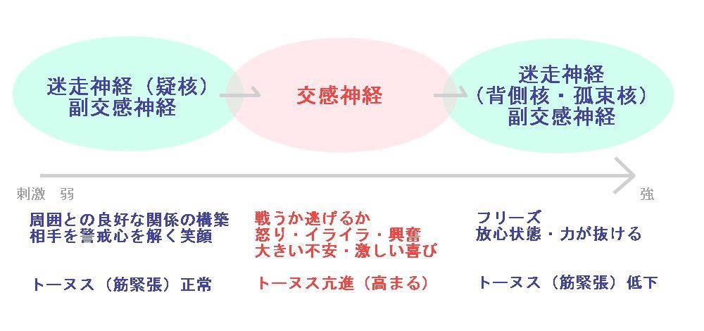自律神経の反応|生駒市の整体院