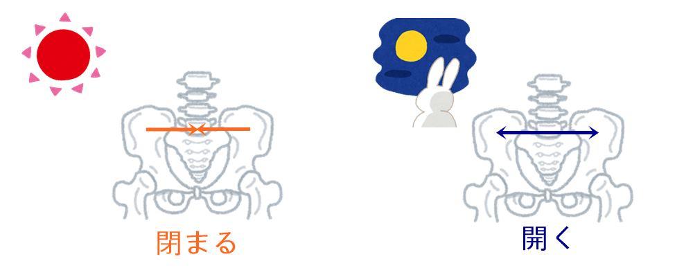腰痛とサーカディアンリズム|生駒市の自律神経専門整体院