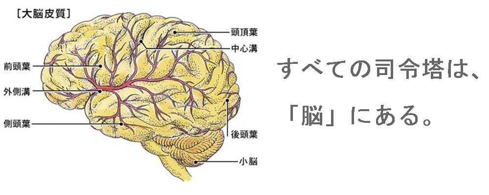 奈良県で自律神経を整える整体院の考え