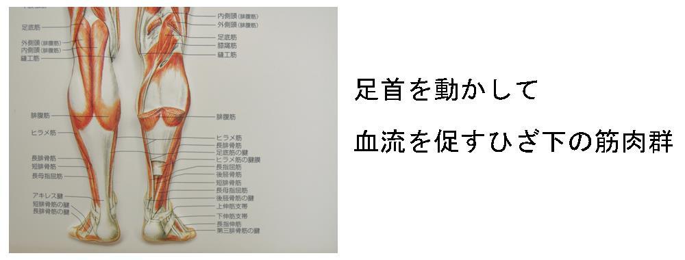 生駒市の自律神経専門整体院「理楽ウェーブ」の膝下の画像