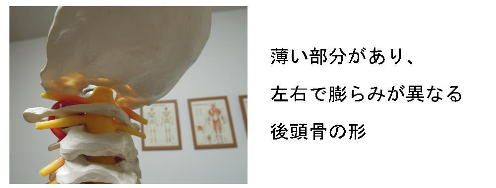 生駒市の自律神経専門整体院「理楽ウェーブ」の後頭骨画像