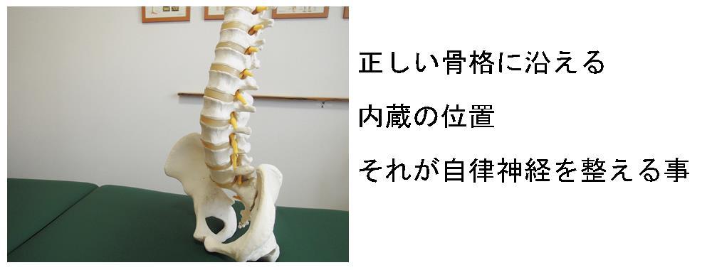 生駒市の整体院「理楽ウェーブ」の自律神経を整える内蔵の画像