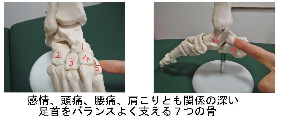生駒市の自律神経専門整体院の足首と腰痛・肩こり・感情の関係性