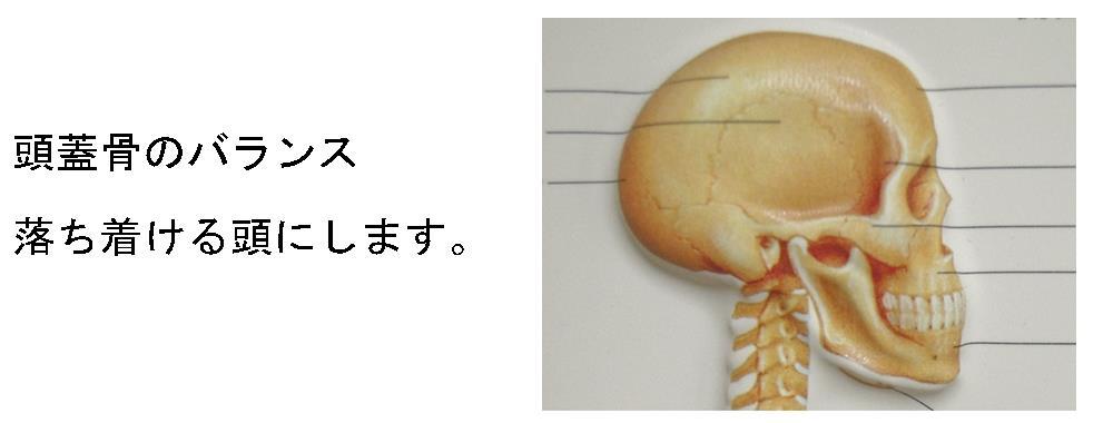 生駒市自律神経専門整体院「理楽ウェーブ」の頭蓋骨の画像