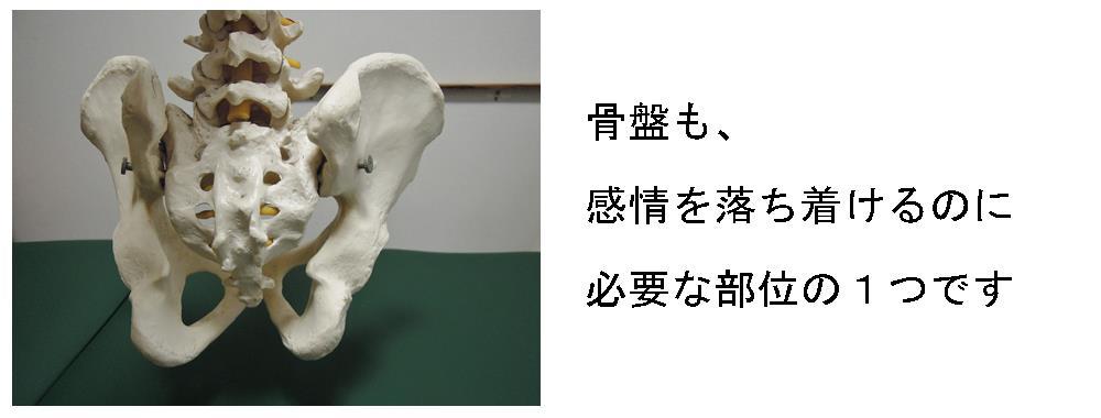 生駒市自律神経専門院の骨盤と感情の写真