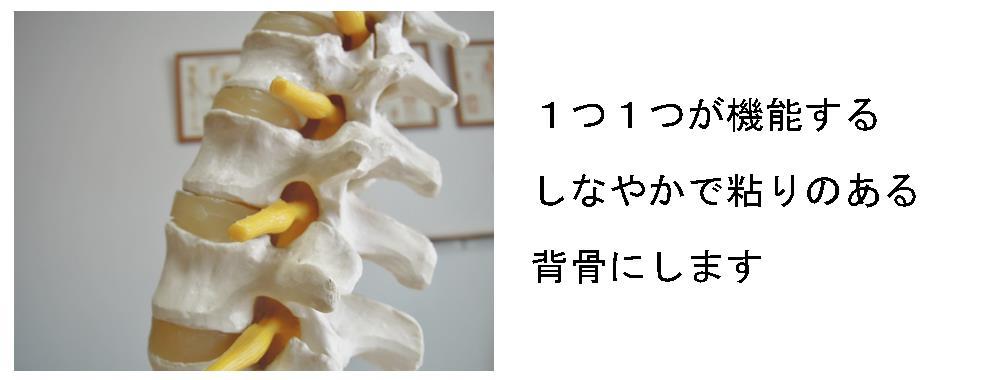 生駒市の整体院「理楽ウェーブ」のしなやかな背骨の写真