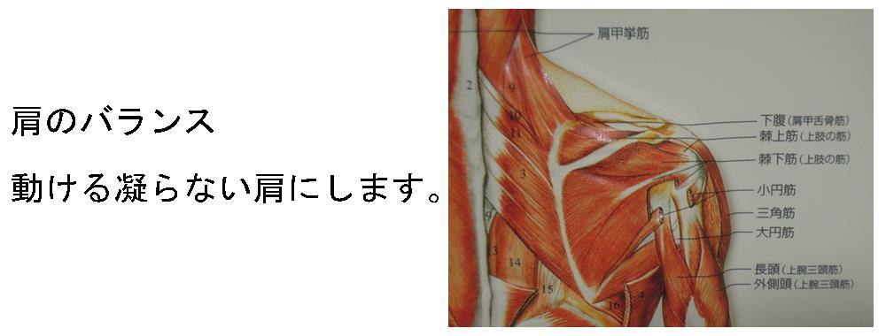 生駒市の自律神経専門整体院の肩の調整の画像