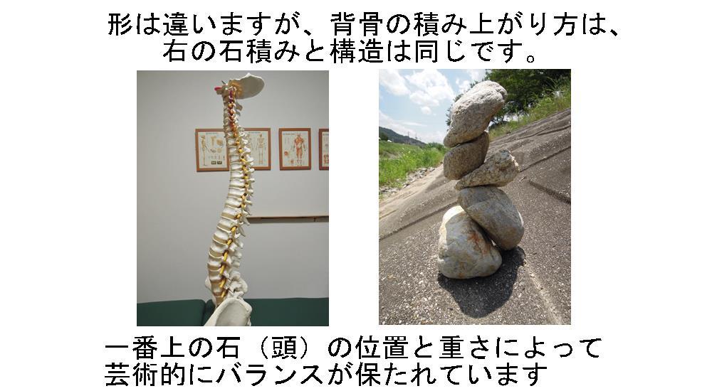 生駒市自律神経専門整体院「理楽ウェーブ」の背骨についての画像