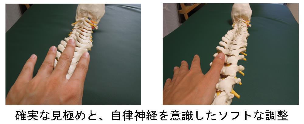 生駒市の整体院理楽ウェーブの自律神経を意識した背骨の調整画像