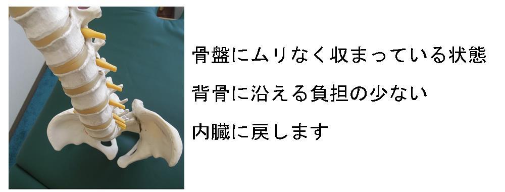生駒市自律神経専門整体理楽ウェーブの骨格に合わせた内蔵の調整画像