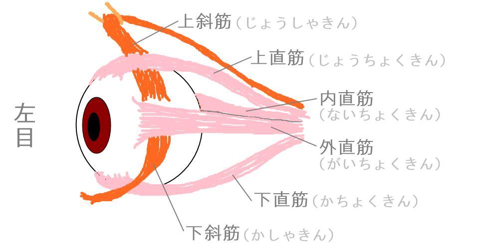 目と首|生駒市の自律神経専門整体院