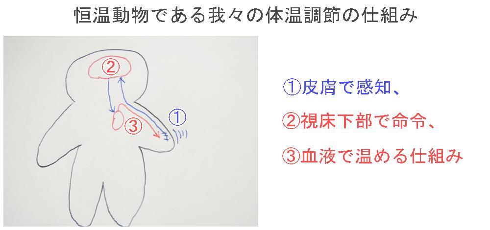 生駒市の自律神経専門整体院「理楽ウェーブ」の体温調節画像