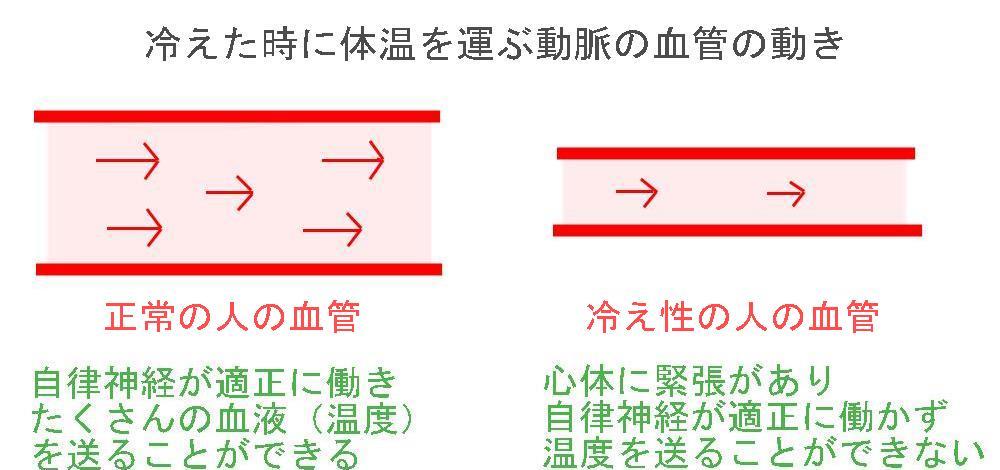 生駒市の自律神経専門整体院「理楽ウェーブ」の冷えと動脈の画像