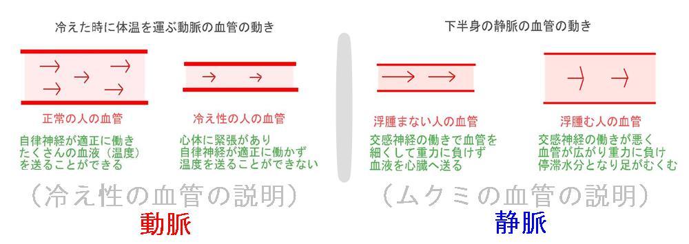 生駒市の自律神経専門整体院のムクミの考え
