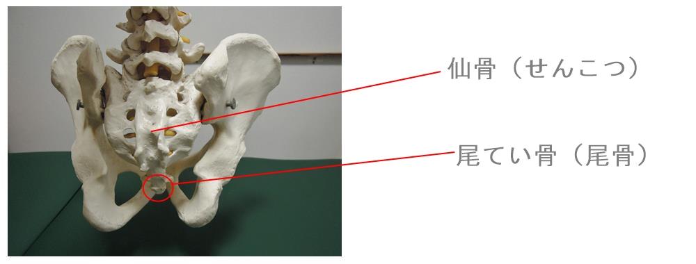 仙骨と尾骨 生駒市の自律神経専門整体院