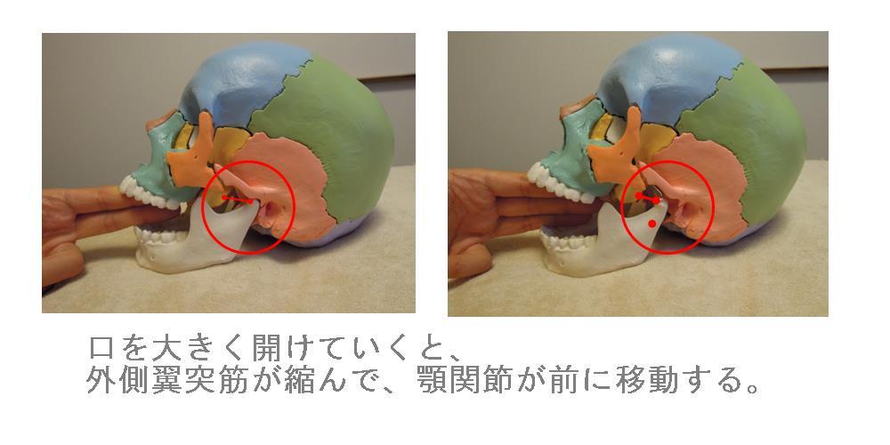 奈良県の自律神経専門整体院の顎関節の説明