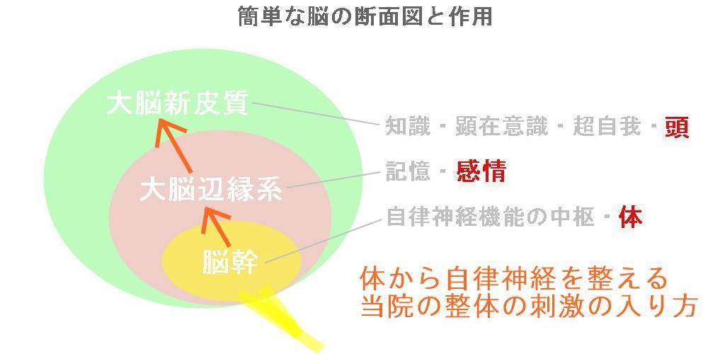 強迫性障害の見解|生駒市の自律神経専門整体院5