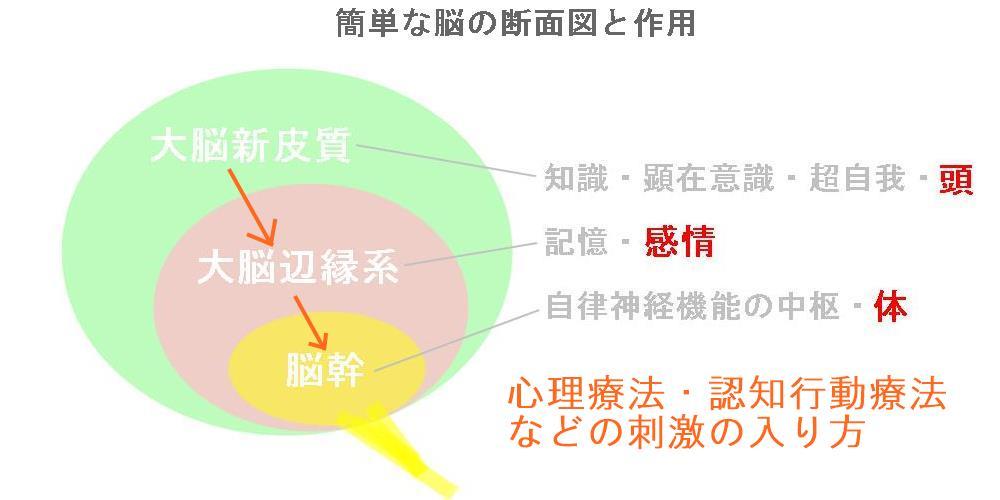 強迫性障害の見解|生駒市の自律神経専門整体院4