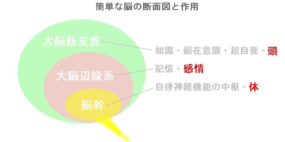 強迫性障害の見解|奈良県の自律神経専門整体院3