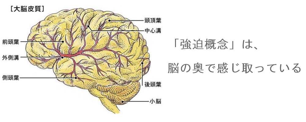 強迫性障害の見解|生駒市の自律神経専門整体院2