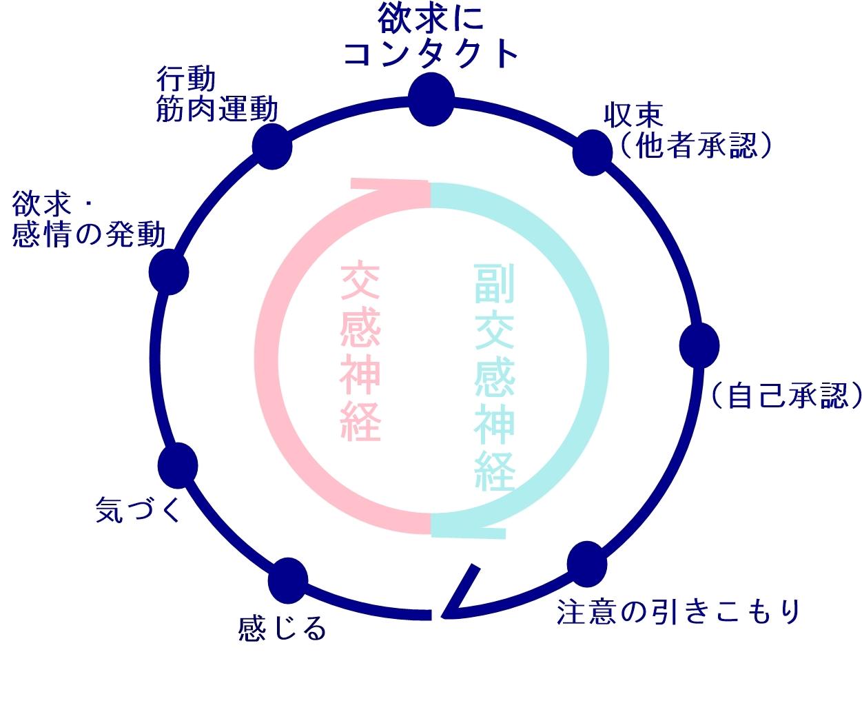 自律神経とエネルギーサークル|生駒市の自律神経専門整体院。
